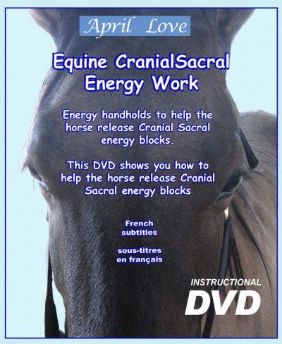 Equine CranioSacral Energy Work