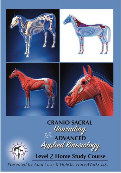 Level 2 Equine Cranio Sacral Unwinding and Advanced Applied Kinesiology Home Study Course -watch instantly -includes 30 minute Skype session